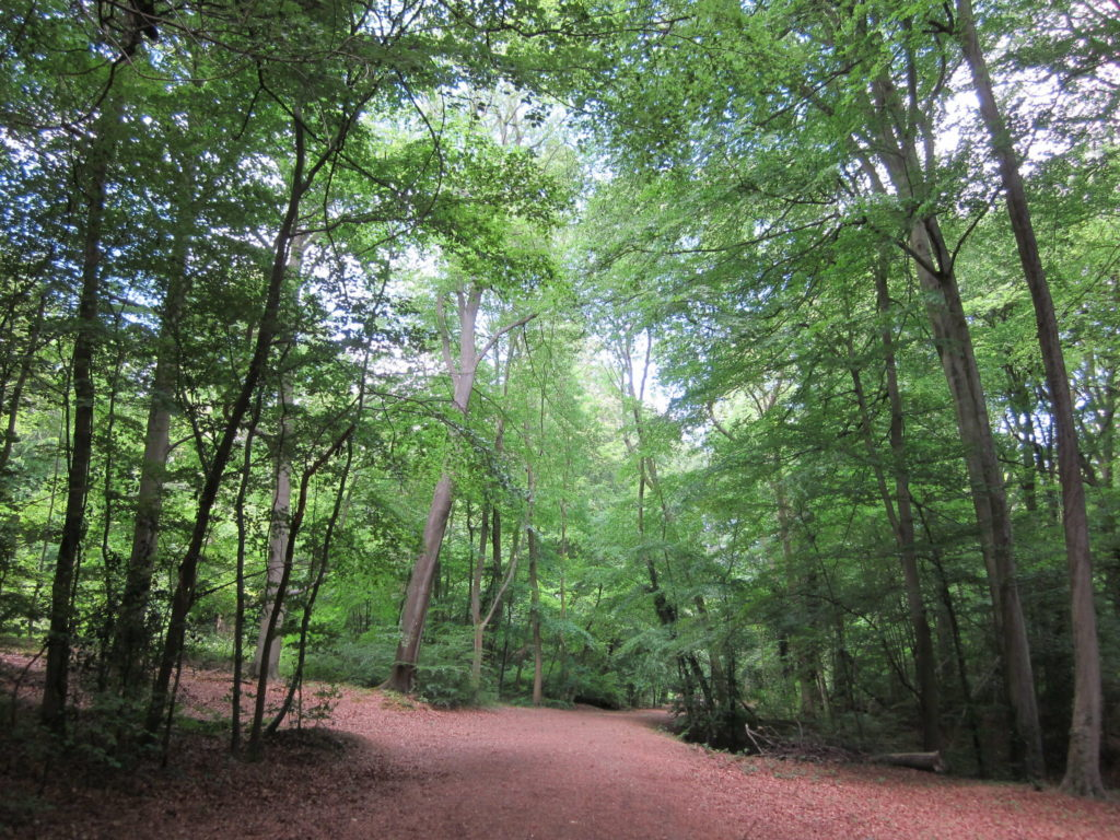 Burnham Beeches in Slough, Buckinghamshire in England