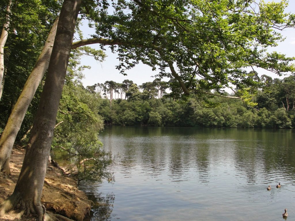 Black Park Country Park in Buckinghamshire, England